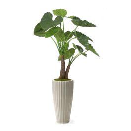 5 Alocasia Calidoro Plant In Glazed White Earthenware Highland Floor Vase Distinctive Designs